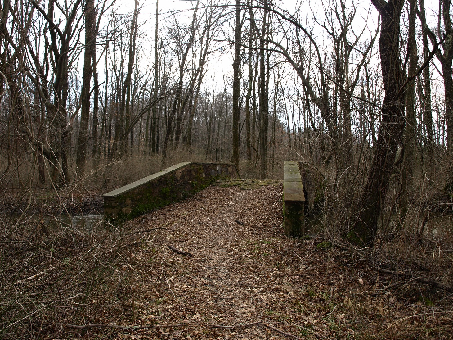 Bridge in Cook Natural Area