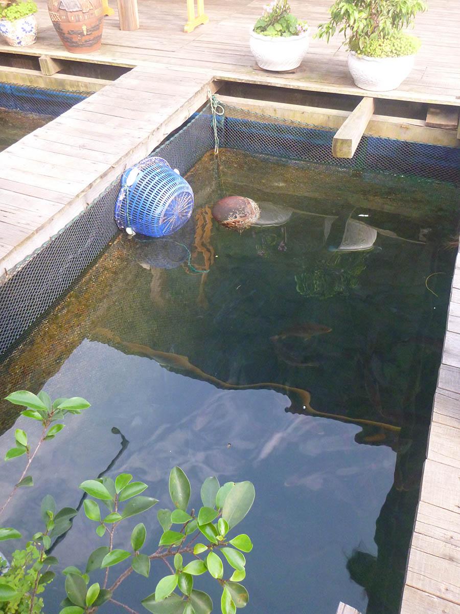 vung-vieng-fish-cage