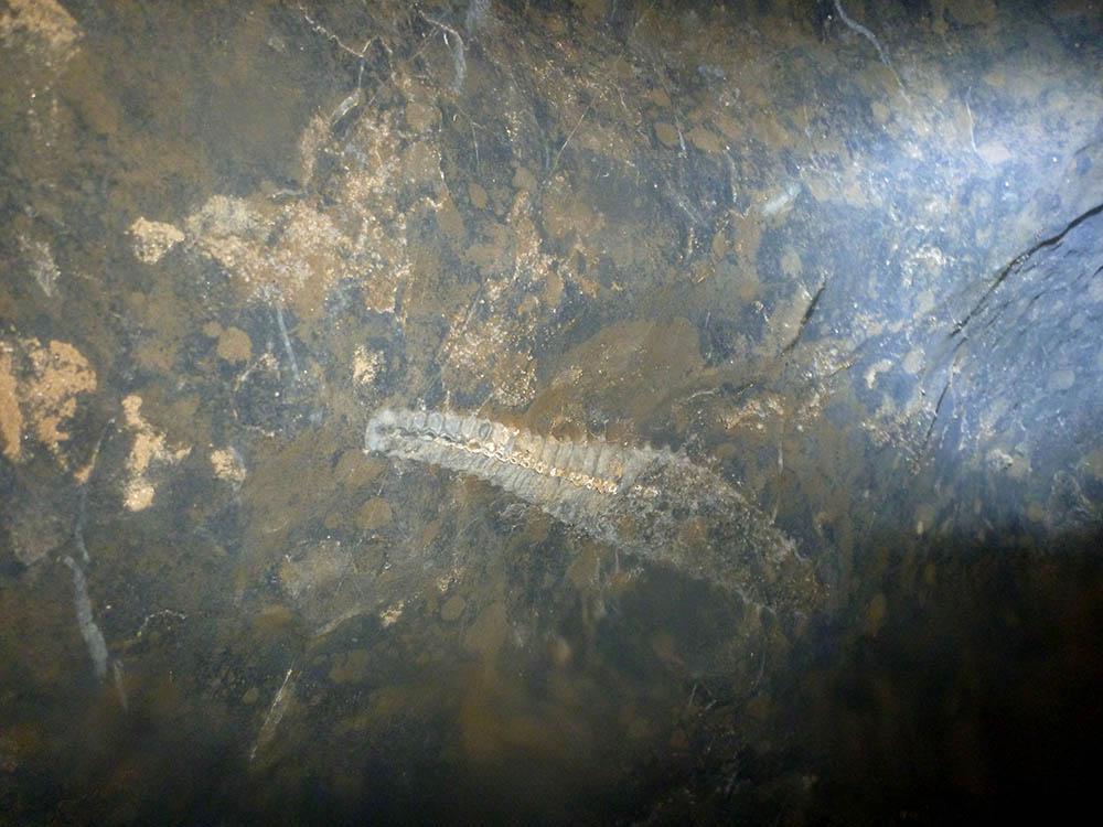 dark-cave-fossil